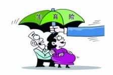 如何申报生育保险?