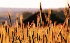 农村户口取消后,这两个证关乎农民的土地归属