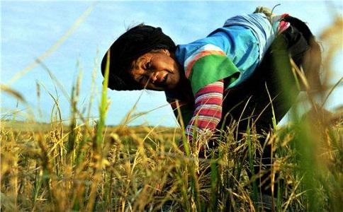 农村养老保险新政策