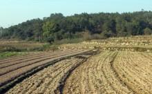 农村土地补偿政策有哪些