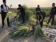 非法种植毒品原植物罪的无罪辩点有哪些