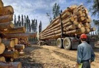 盗伐林木罪量刑标准是多少?