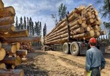 盗伐林木罪量刑标准是多少?...