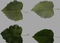 植物新品种权特点是什么