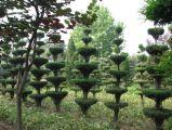 植物新品种保护面临问题有哪些