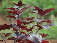 植物新品种权保护的方式是什么