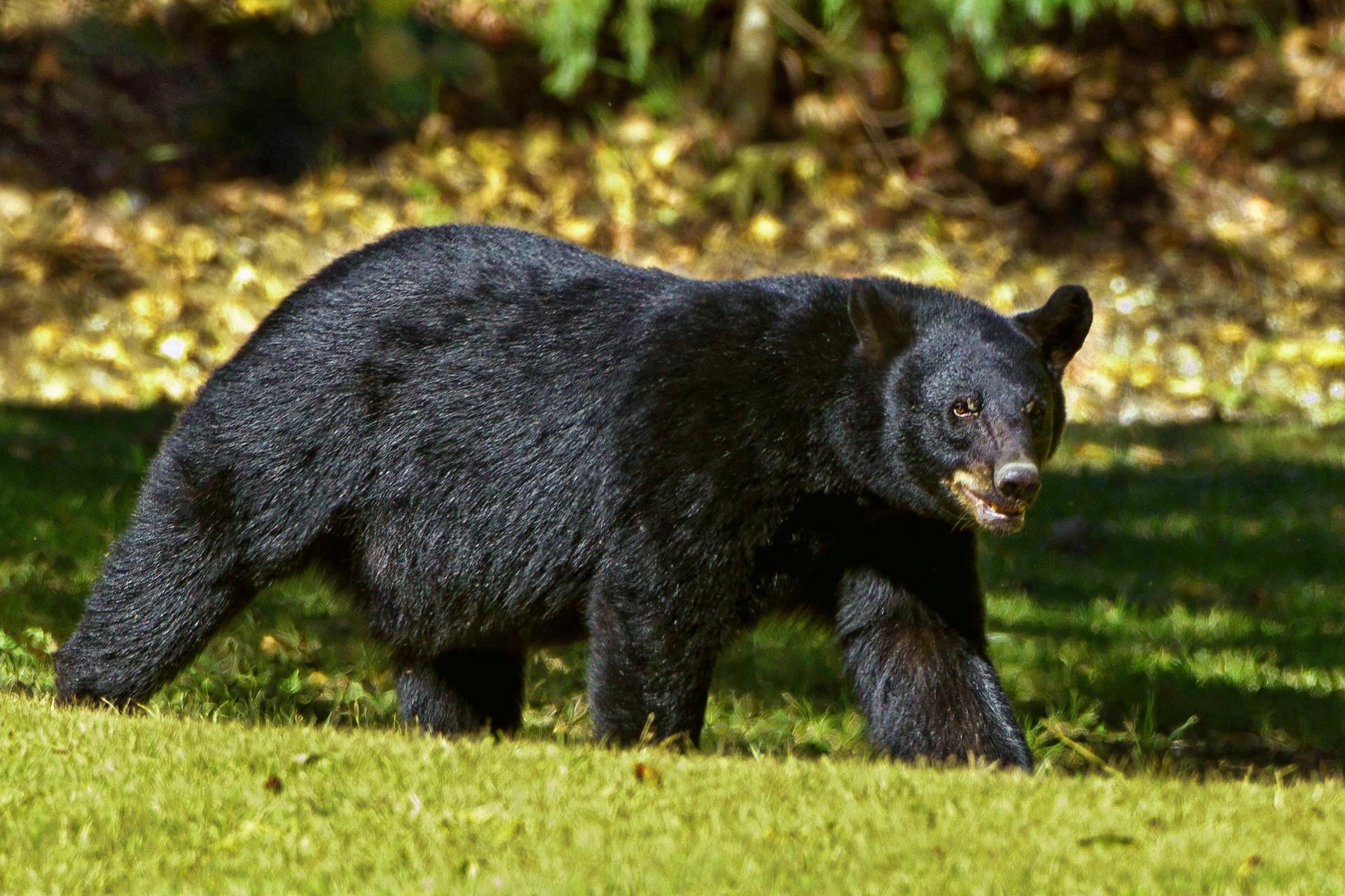 遭熊攻击无奈射杀,是否需要承担法律责任?