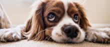 饲养的动物致人损害的由谁承担民事责任