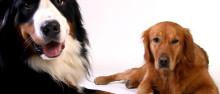 文明养狗正确遛狗!防范动物致人损害纠纷有啥妙招?