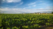 企业对农村集体所有的土地征用需要什么手续