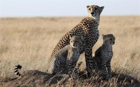没有许可证训养野生动物是否违法