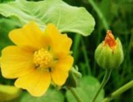 植物新品種權申請流程是怎樣的...