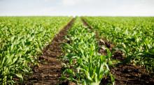 植物新品种权优先权是什么