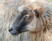 """做個快樂的""""羊毛黨""""?某些""""薅羊毛""""的行為涉嫌違法!"""