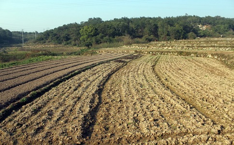 土地承包期限是多长?