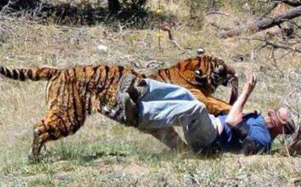 桂林老虎伤人谁担责?