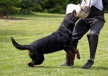饲养动物致人损害责任怎么确定的