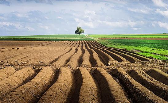 最新土地承包经营权流转方式是什么