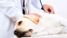 宠物注射疫苗死亡 医院是否应该赔偿?