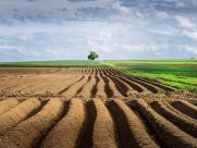 国家农村土地政策是怎样的