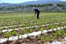 农民征地补偿分配方案是什么...
