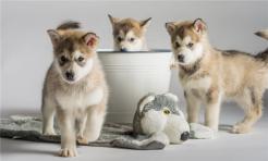 饲养动物致人损害的免责事由有哪些...