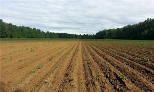 农村土地承包期限是多少年